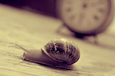 caracol: un caracol de tierra y un reloj de escritorio antiguo en una mesa de madera, en tono sepia