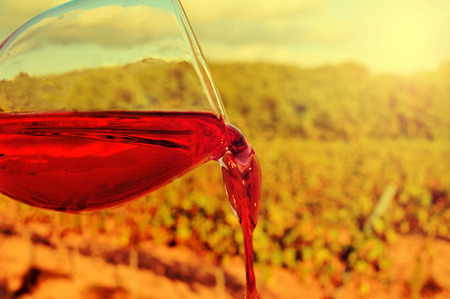 closeup of a glass with red wine in a vineyard photo