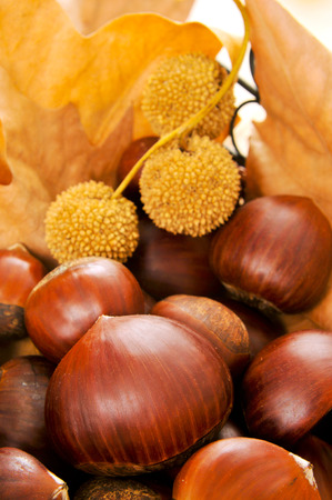 closeup of some chestnuts and some autumn leaves photo