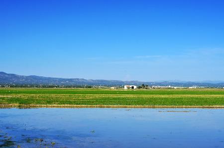 view of a paddy field in Delta del Ebro, in Catalonia, Spain photo