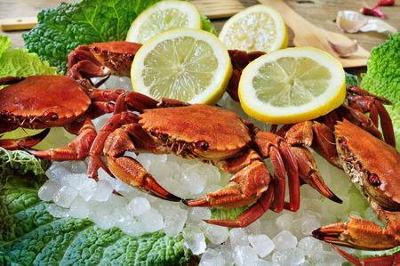 ice crushed: wat rauwe fluwelen krabben op crushed ijs, klaar om te worden gekookt