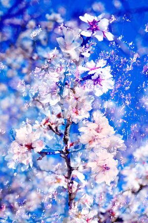 double exposure of almond trees in full bloom photo