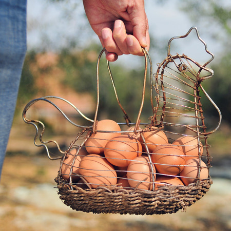 hand basket: closeup of the hand of a young caucasian man carrying a hen-shaped rusty metallic basket full of brown eggs just collected from the henhouse