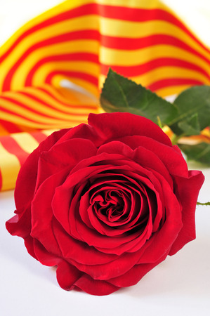 sant: a red rose and the catalan flag on a book for Sant Jordi, the Saint Georges Day, when it is tradition to give red roses and books in Catalonia, Spain