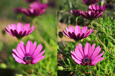 two different photos of some purple flowers shot with different apertures, the left with an aperture of f2 and the right with an aperture of f22 Stock Photo