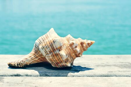 conch: closeup of a conch on an old wooden pier on the sea, with a filter effect