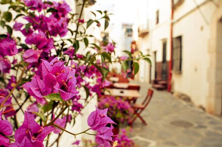 white washed: view of a charming street of Cadaques, Costa Brava, Spain, with the typical white washed houses and purple bougainvillea flowers Stock Photo