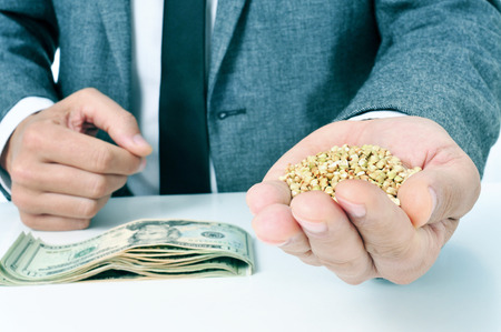 closeup of a young caucasian businessman with a pile of buckwheat seeds in his hand and a pile of dollar banknotes on his office desk, depicting the agribusiness concept Stock Photo