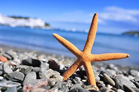 shingle beach: closeup of a seastar in the seashore in a shingle beach Stock Photo