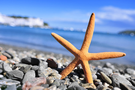 beach shingle: primo piano di un seastar in riva al mare in una spiaggia di ciottoli
