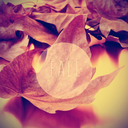 melancholia: a pile of dried leaves and the text fall in a circle