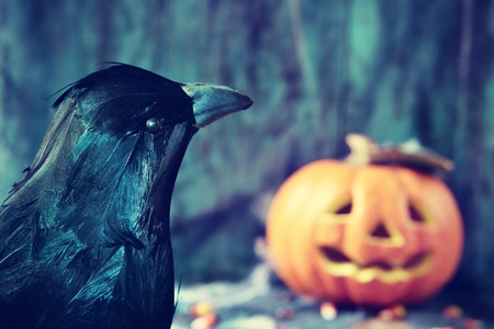 dismal: closeup of a crow and a carved pumpkin in the background in a dismal scene