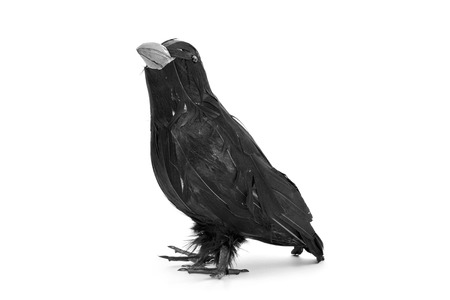 crow: closeup of a fake black crow on a white background