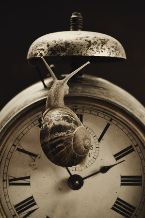 poky: closeup of a land snail on an old and rusty alarm clock