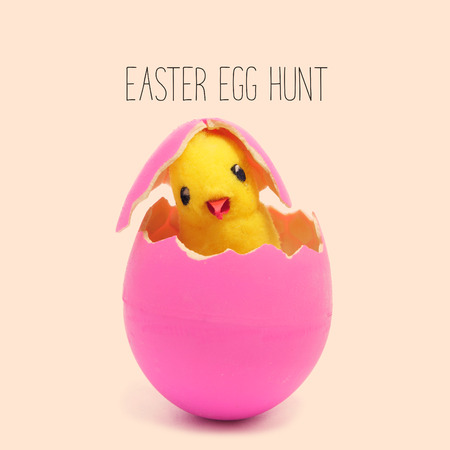 the text easter egg hunt and a teddy chick emerging from a hatched pink easter egg, against a pale pink background Stock Photo