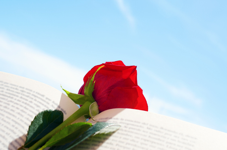 レッド ・ サン ・ ジョルディ、赤いバラを与えるため伝統は、カタルーニャ、スペインの本とサン ジョルジュ日の開いた本のバラのクローズ アッ