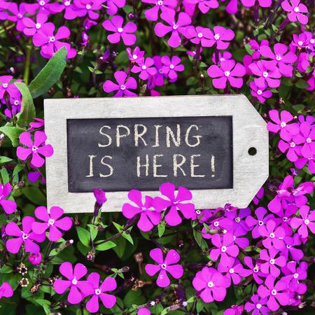 bienvenida: Primer plano de una pizarra en forma de etiqueta con el muelle de texto se coloca entre aquí muchas flores silvestres de color rosa Foto de archivo