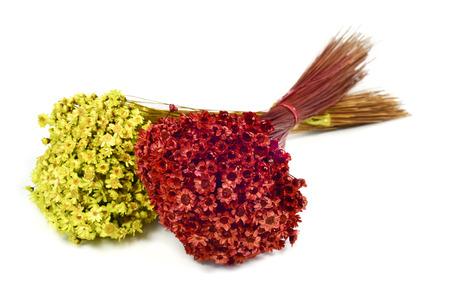 fleurs des champs: deux bouquets de petites fleurs rouges et jaunes sur un fond blanc Banque d'images