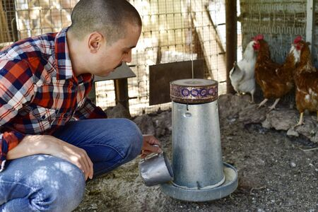 compound: closeup of a young caucasian farmer man wearing a plaid shirt feeding the hens in a henhouse