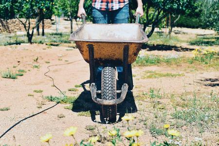 urban gardening: closeup of a young farmer man wearing a plaid shirt pushing a wheelbarrow in an organic orchard