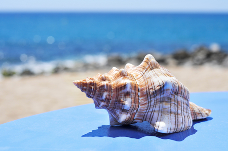 closeup of a conch on a blue surface on the beach, with a bright blue sea in the background