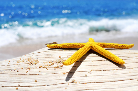 sand grains: closeup of a yellow starfish and some grains of sand on an old washed-out tree trunk on the beach, with a bright blue sea in the background Stock Photo