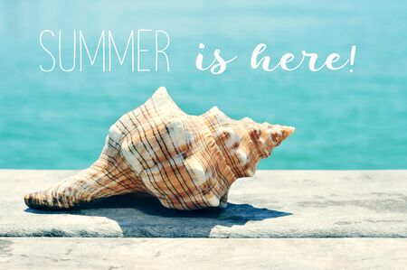 closeup of a conch on a weathered wooden pier with the ocean in the background and the text summer is here