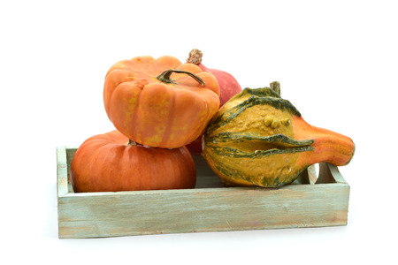 peculiar: a rustic wooden tray with an assortment of different and peculiar pumpkins on a white background Stock Photo