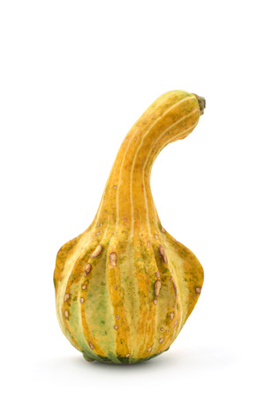 peculiar: a peculiar long pumpkin on a white background Stock Photo