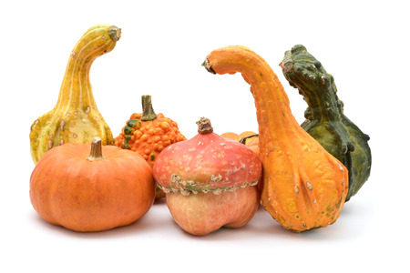 peculiar: an assortment of different and peculiar pumpkins on a white background Stock Photo