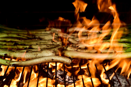 calsotada: closeup of some calcots, sweet onions typical of Catalonia, Spain, beeing cooked in a barbecue