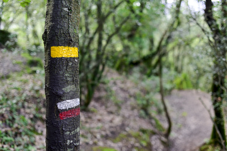 characteristic: a yellow mark for a local path and the characteristic white and red stripes of a GR path marked in a tree in the Garrotxa Volcanic Zone Natural Park, in Olot, Province of Gerona, Spain