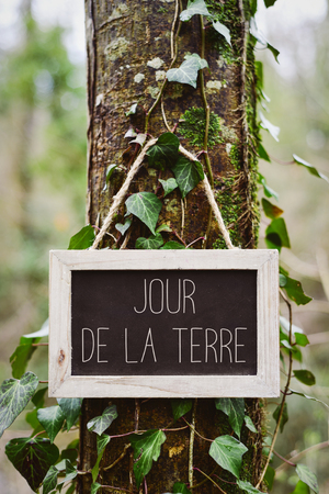 madre tierra: closeup of a wooden-framed chalkboard with the text jour de la terre, earth day in french, in the trunk of a tree