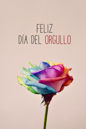 closeup of a rose with its petals with the colors of the rainbow flag and the text feliz dia del orgullo, happy gay pride in Spanish on a pink background