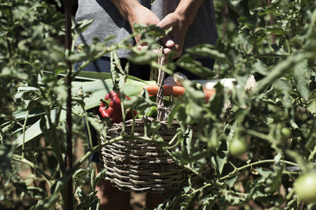 growers: closeup of a young caucasian man with a rustic basket full of vegetables freshly collected in an organic orchard