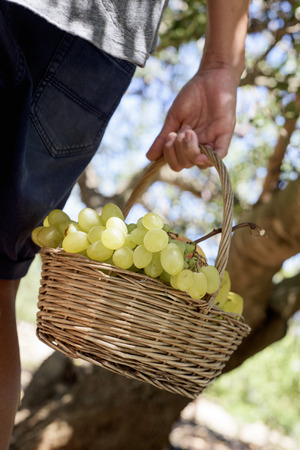 closeup of a young caucasian man seen from behind with a rustic basket full of fruit freshly collected in an organic orchard Stock Photo