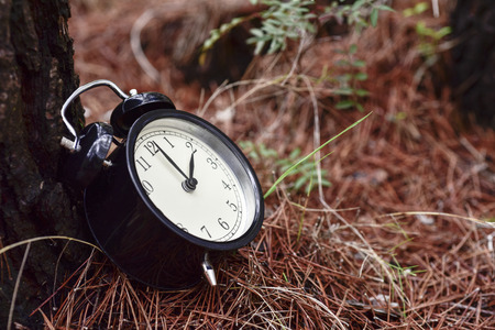 closeup of an alarm clock on the ground next to a tree trunk in a forest in autumn Banque d'images
