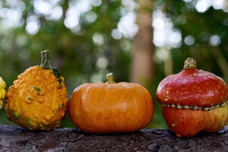 closeup of some different pumpkins in the branch of a tree Stock Photo