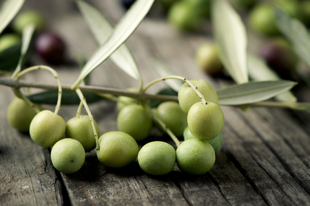 closeup of a twig of arbequina olive tree from Catalonia, Spain, on a wooden rustic table
