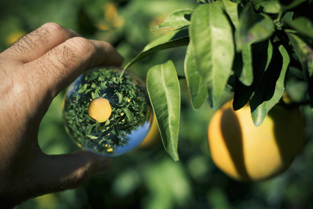 closeup of the hand of a young caucasian man outdoors holding a crystal ball where it is reflected an orange tree