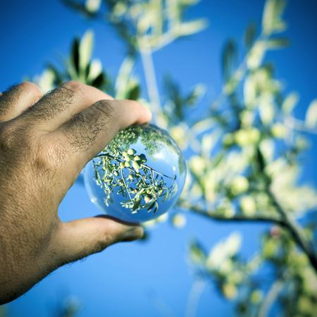 gros plan de la main d'un jeune homme caucasien à l'extérieur tenant une boule de cristal où il se reflète un olivier Banque d'images