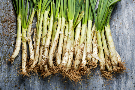high-angle view of some raw calcots, sweet onions typical of Catalonia, Spain, on a rustic wooden table