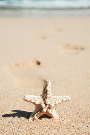 closeup of a starfish on the sand of a lonely beach