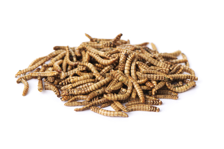 a pile of fried worms seasoned with garlic and herbs, on a white background