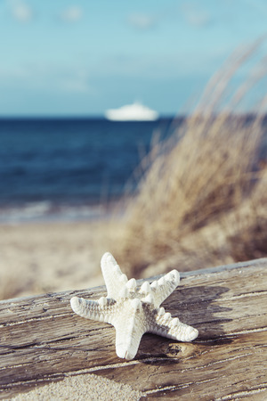 closeup of a starfish on an old washed-out tree trunk on the beach, with the sea and a ship in the background