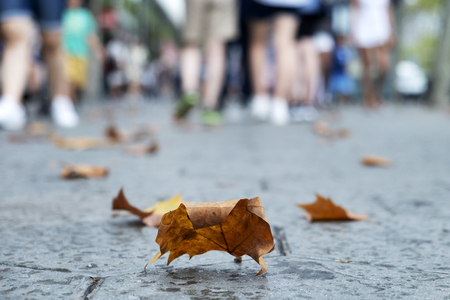 closeup of some dry leaves on the pavement of a street in Barcelona, Spain, with some unrecognizable people in the background Foto de archivo