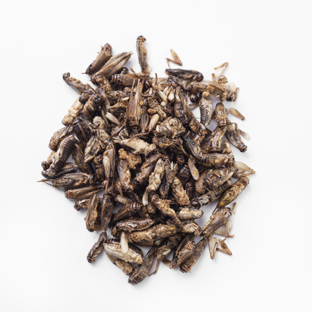 High angle view of a pile of fried crickets seasoned with onion and barbecue sauce, on a white