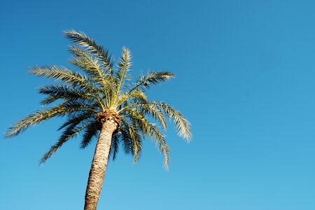 closeup of the top of a palm trees against the blue sky, with some blank space on the right Stock fotó