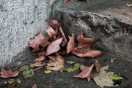 closeup of some dry leaves on the steps of an old outdoor stairway 스톡 콘텐츠