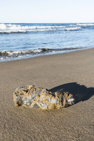 closeup of a used plastic bottle, covered with wet sand, on the sand of a lonely beach, brought back by the ocean to the seashore